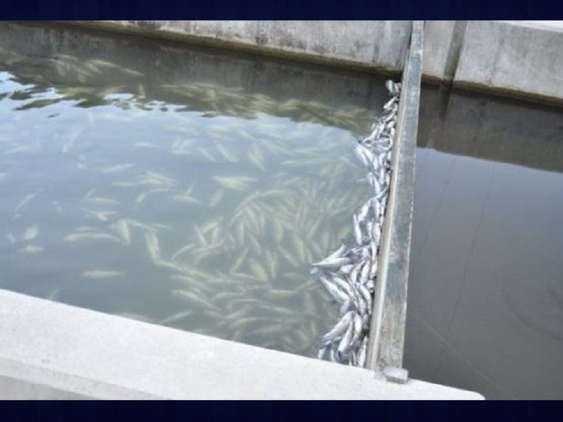 Reward offered in fish hatchery water tampering for Georgia fish hatcheries